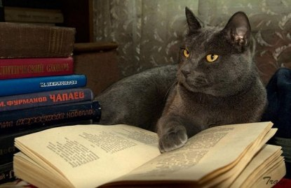cats_reading_books_9