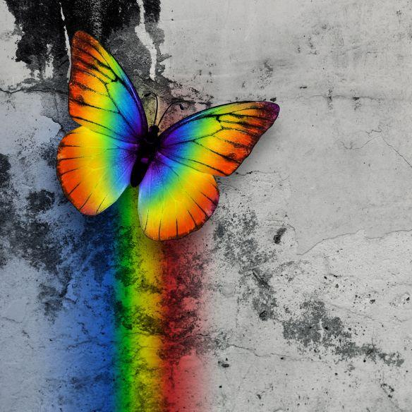 47072077 - bright rainbow butterfly on monochrome grange wall