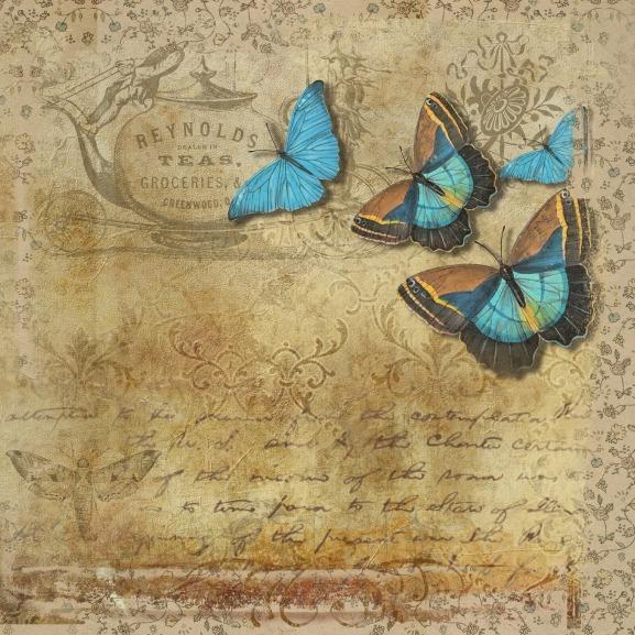 butterfly-1763245_1920