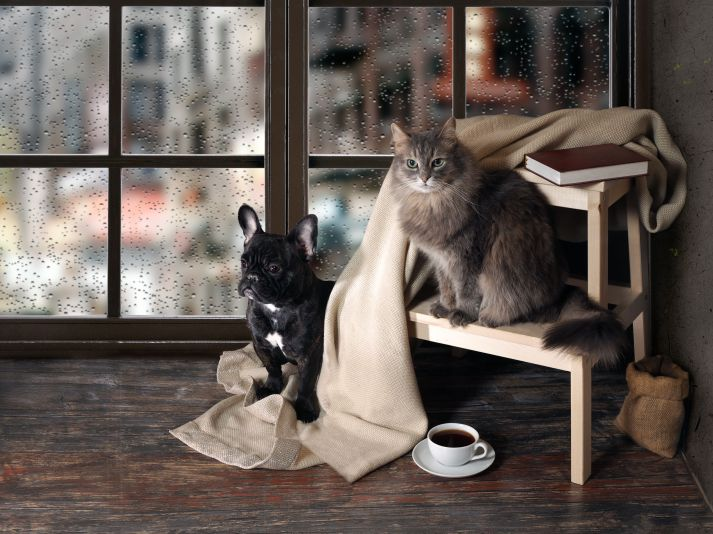 67310753 - comfortable room with panoramic window. dog and cat sitting at the ladder, book, cup of coffee, plaid