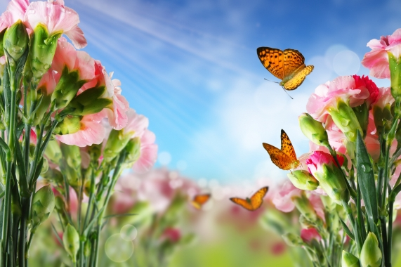 butterfly on many flowers