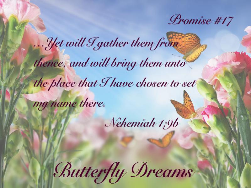 Butterfly promise #17