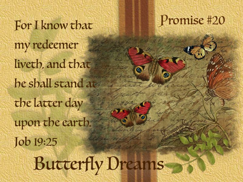 Butterfly promise #20