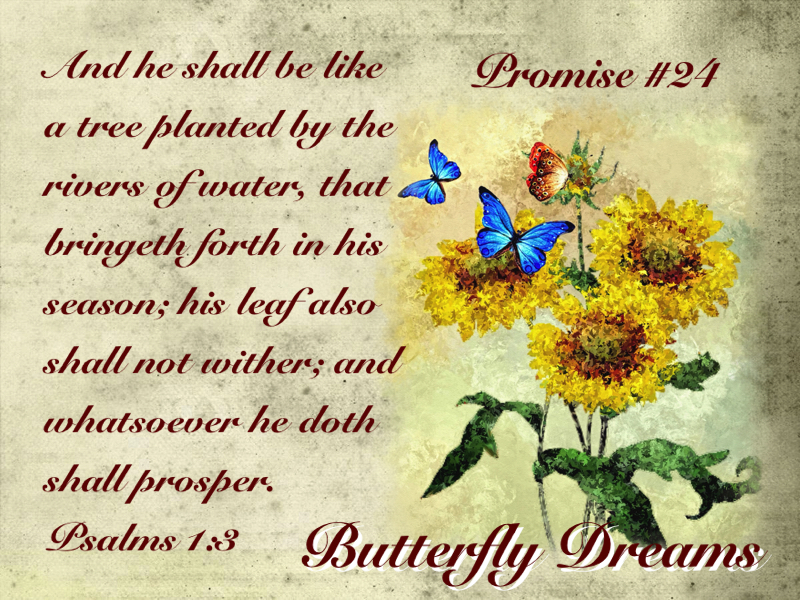 Butterfly promise #24