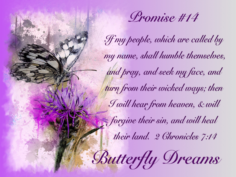 Butterfly promises #14