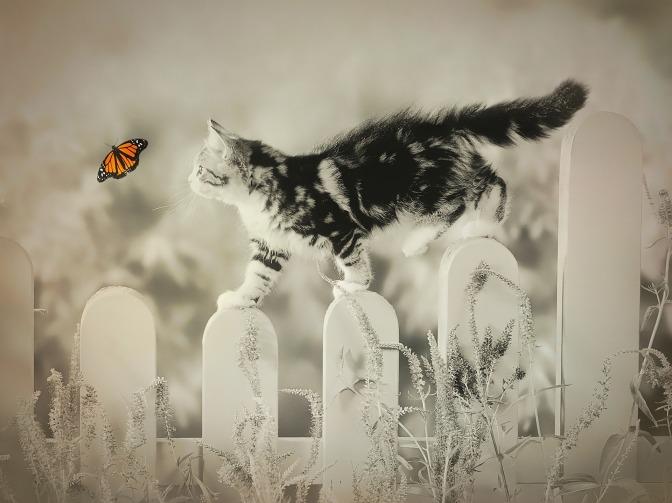 cat-2352807_1920