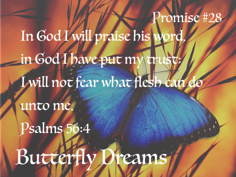 Butterfly promise #28
