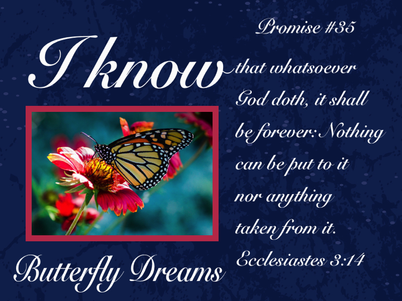 Butterfly promise #35