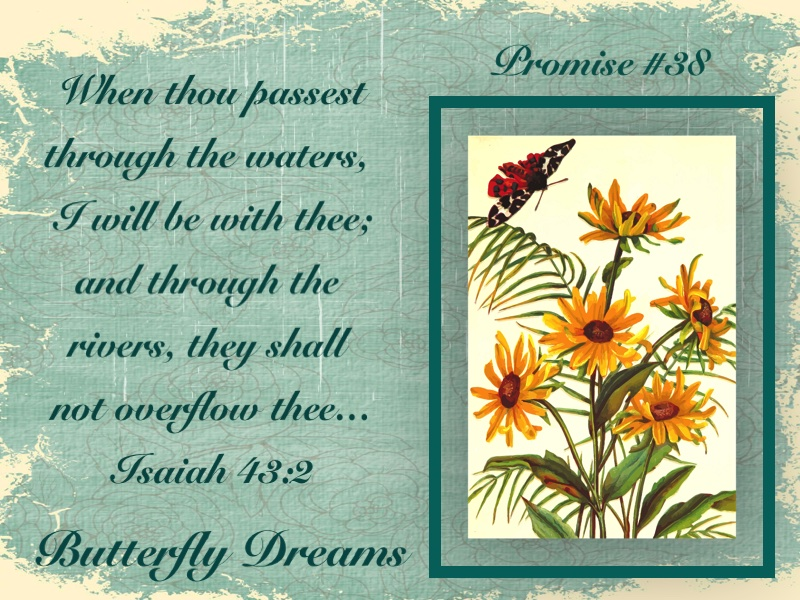 Butterfly promise #38