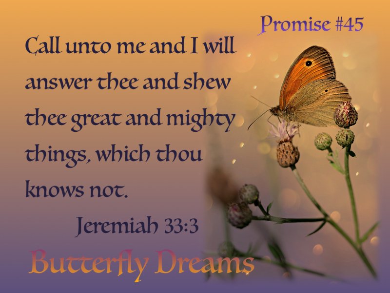 Butterfly promise #45