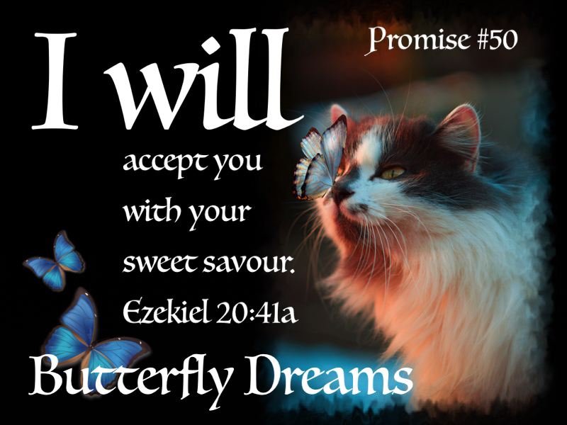 Butterfly promise #50
