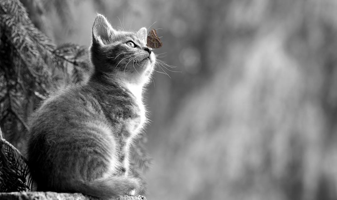 cat-2810383_1920