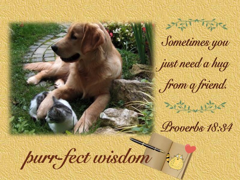 purr-fect wisdom #1